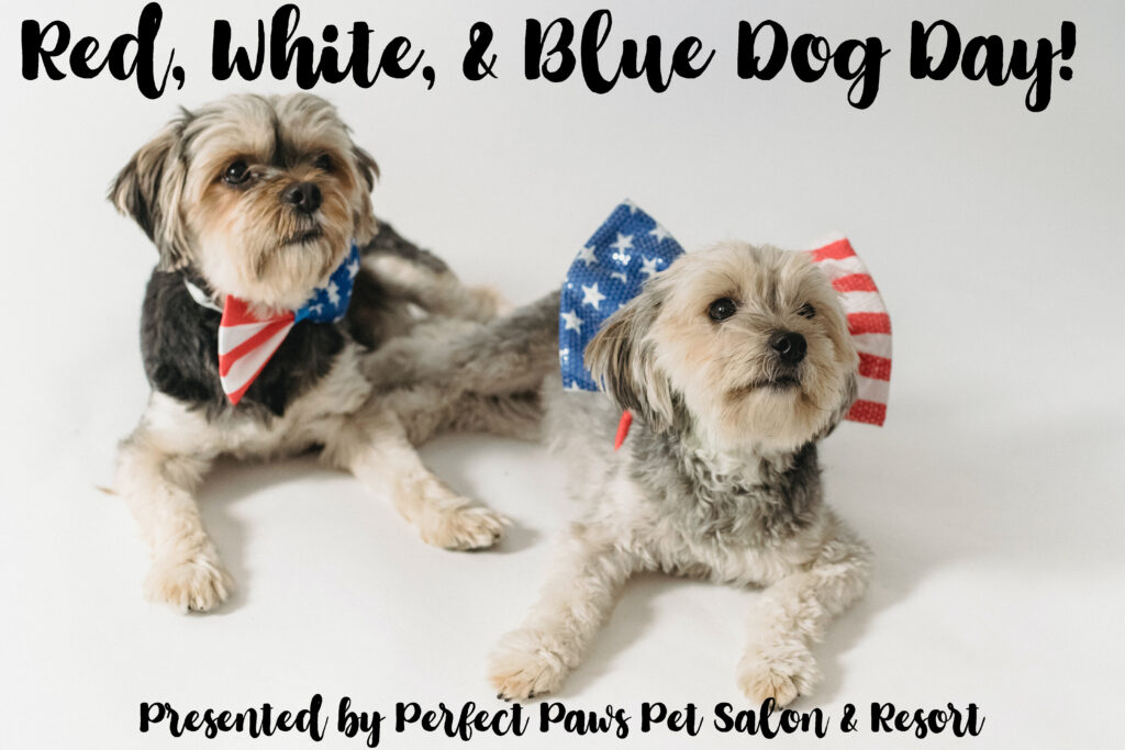Red, White, and Blue Dog Day